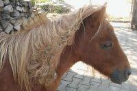 Czytaj więcej: Gucio po wizycie u fryzjera - au naturel