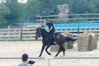 Czytaj więcej: Rozmawiając z koniem, czyli MOK inaczej